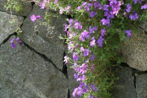 Steine für Gartenmauer