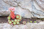 Bruchsteinmauer mit Pflanzen