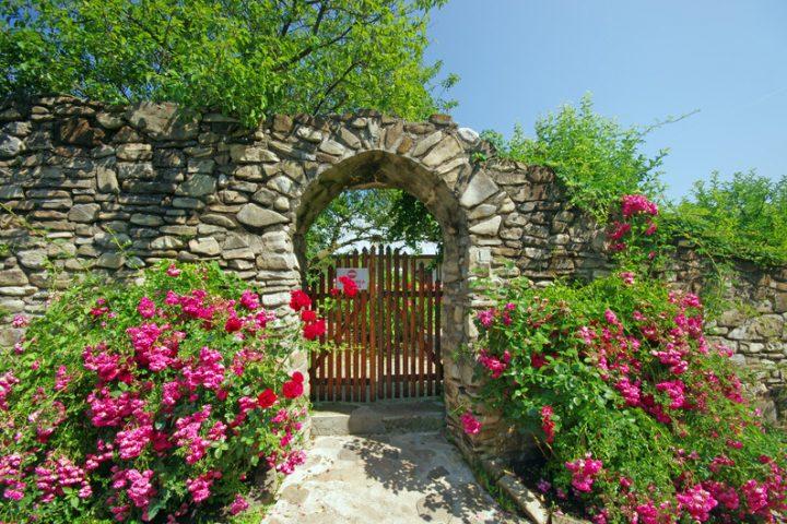 Steinmauer bepflanzen