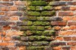 Steinmauer feucht