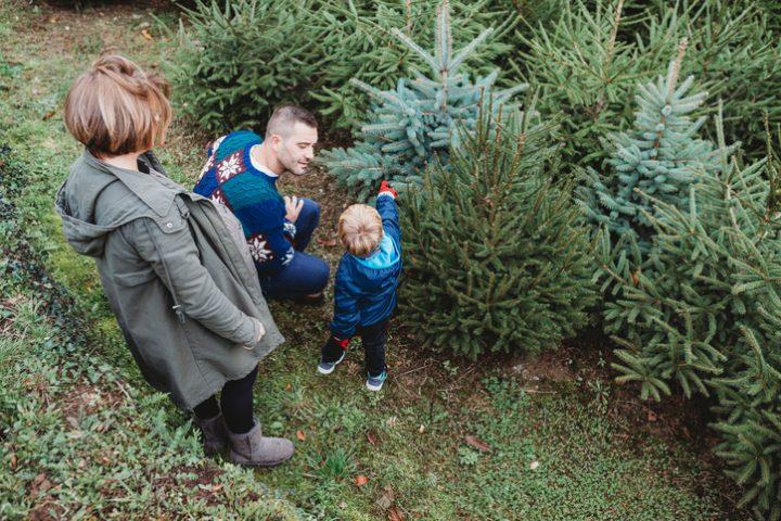 Weihnachtsbaum Arten