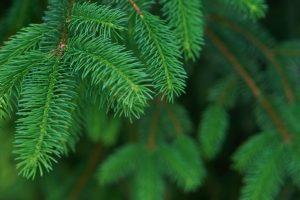 Weihnachtsbaum Blätter