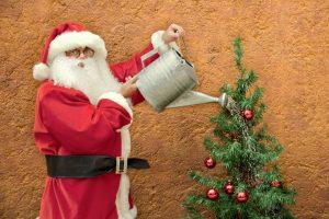Weihnachtsbaum gießen