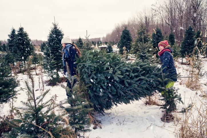 Wann Weihnachtsbaum Aufstellen.Tannenbaum Aufstellen So Machen Sie S Richtig Weihnachtsbaum