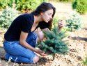 Weihnachtsbaum züchten