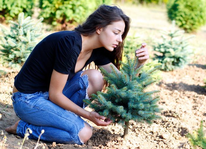 tannenbaum z chten so ziehen sie ihren eigenen weihnachtsbaum. Black Bedroom Furniture Sets. Home Design Ideas