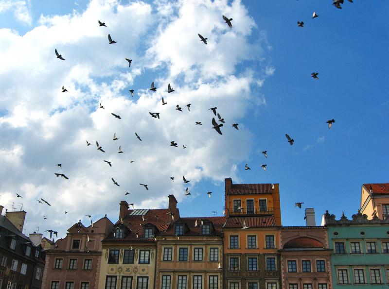 Tauben vergrämen