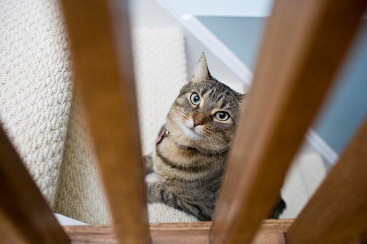 Treppenschutzgitter Katzen