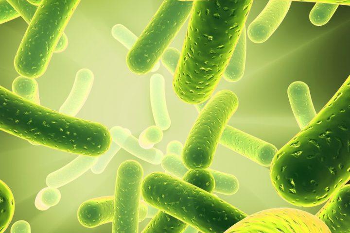 Trinkwasserverordnung Legionellen