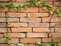Trockenmauer anlegen
