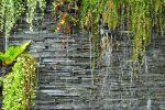 Trockenmauer bepflanzen