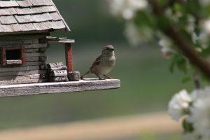 Vogelhaus für Balkon