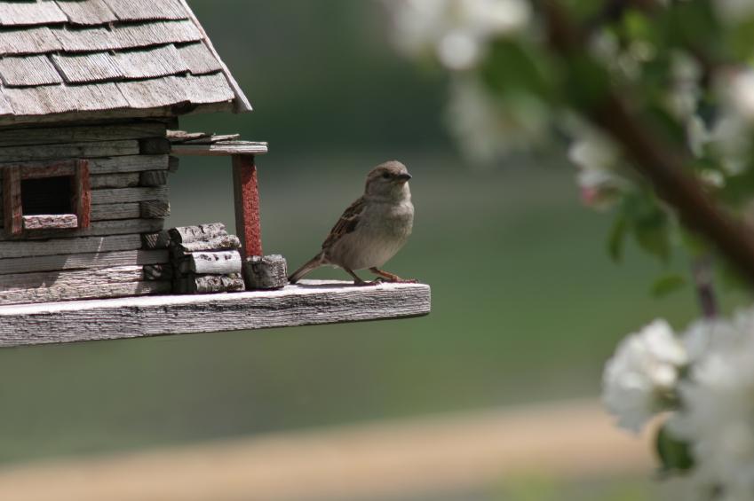 Vogelhaus f r den balkon sch ne ideen zum selbermachen for Ideen fa r kleine balkone