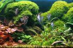 Wasserwechsel Aquarium