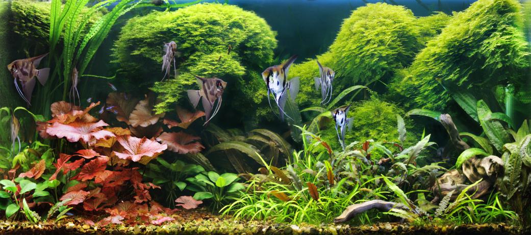 Wasserwechsel im aquarium wie oft wann wie for Aquarium heizen