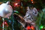 Tannenbaum Katzen