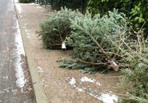 weihnachtsbaum abbauen wann wie wird er entsorgt. Black Bedroom Furniture Sets. Home Design Ideas