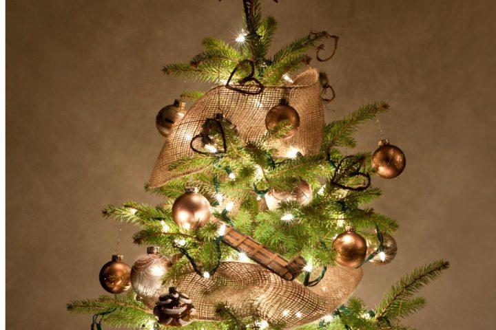 Bis Wann Bleibt Der Weihnachtsbaum Stehen.Weihnachtsbaum Im Topf Eine Lohnenswerte Anschaffung