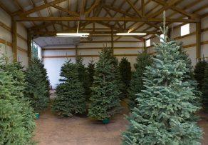weihnachtsbaum lagern so h lt er l nger