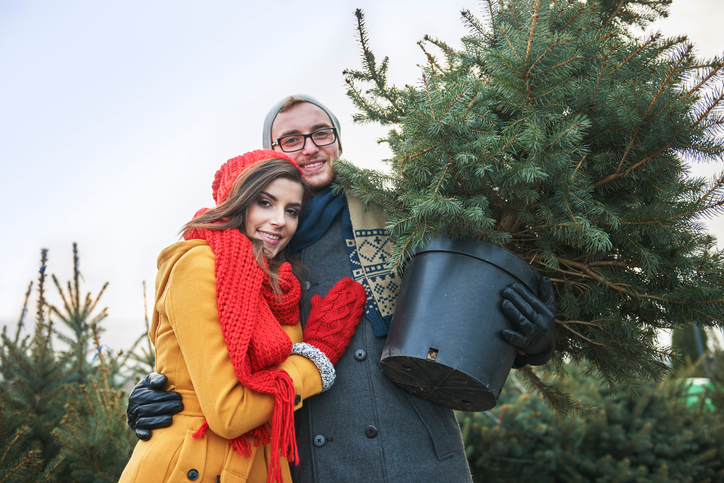Weihnachtsbaum mit wurzeln preise