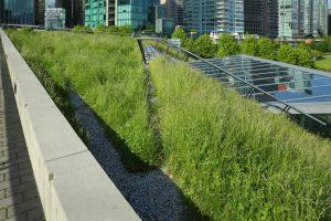 Welche Bitumenbahnen werden mit Dachbegrünungen verwendet
