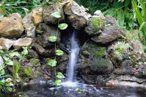 Zimmerbrunnen pflanzen