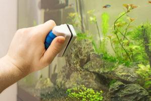 algen-im-aquarium-entfernen-hausmittel