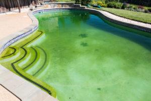algen-im-pool-trotzdem-baden