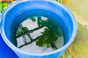 algen-im-regenwassertank
