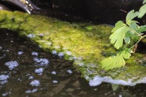 algen-im-teich-hausmittel