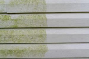 algen-und-pilze-an-fassaden-entfernen