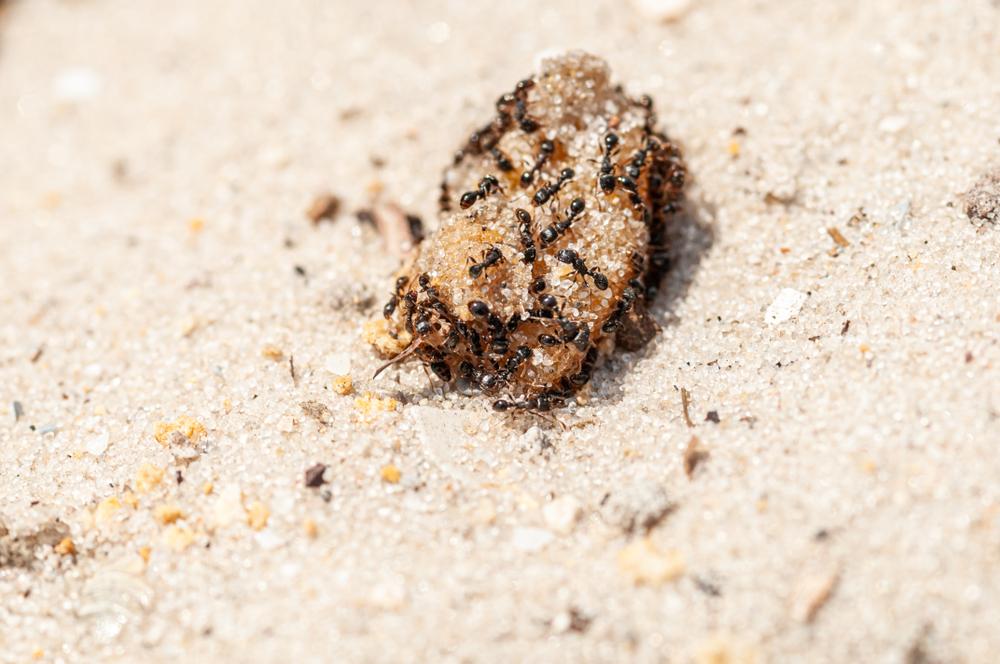 ameisen im sandkasten » so werden sie sie los