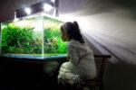 aquarium-im-keller
