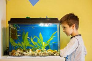 aquarium-rueckwand-streichen