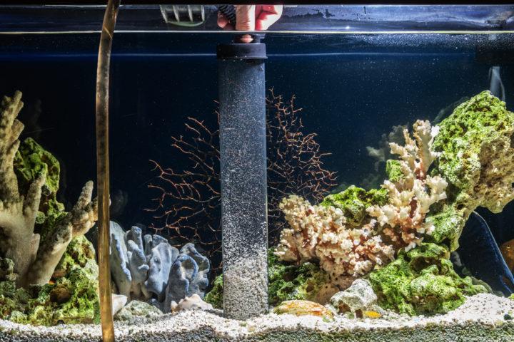 aquarium-steine-von-algen-befreien