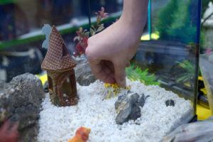 aquarium-umbauen