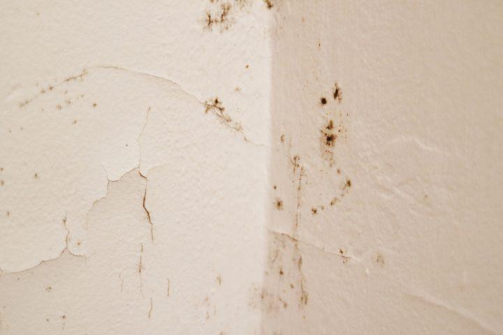 Gut gemocht Aufsteigende Feuchtigkeit an der Innenwand » Ursachen GX92
