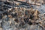 bambus-verbrennen