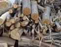Das beste Brennholz finden