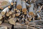 bestes-brennholz