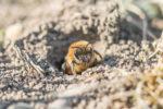 erdbienen-vertreiben
