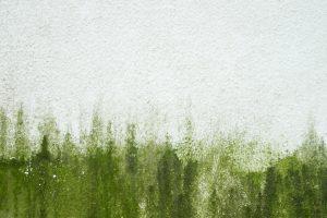 fassade-algen-entfernen
