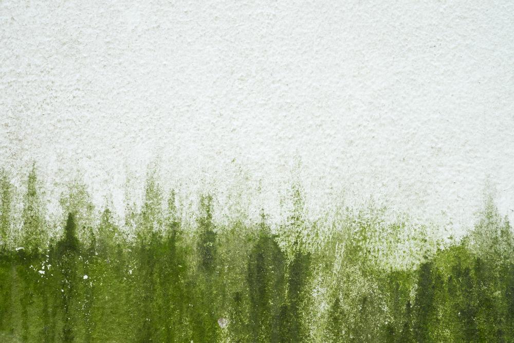Von Der Fassade Algen Entfernen So Wird S Gemacht