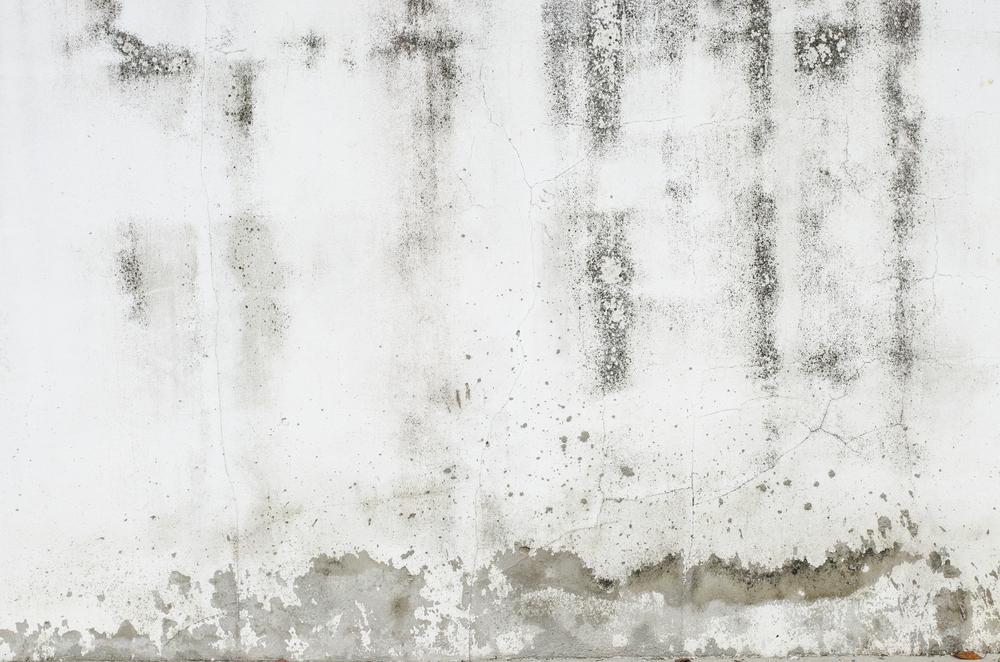 Feuchte Wande Sanieren Die Massnahmen Im Uberblick