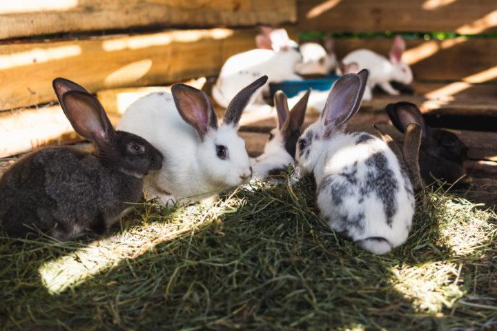gartenhaus-zum-kaninchenstall-umbauen