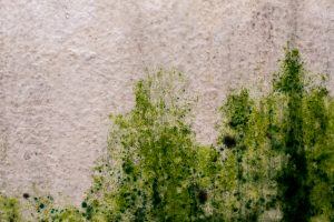 gruener-schimmel-an-der-wand