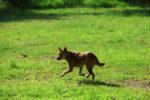 hunde-vertreiben