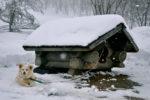 hundehuette-winterfest-machen