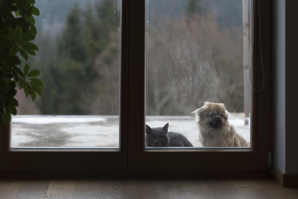 Bekannt Katzenklappe in Glastür einbauen » Darauf ist zu achten RW36