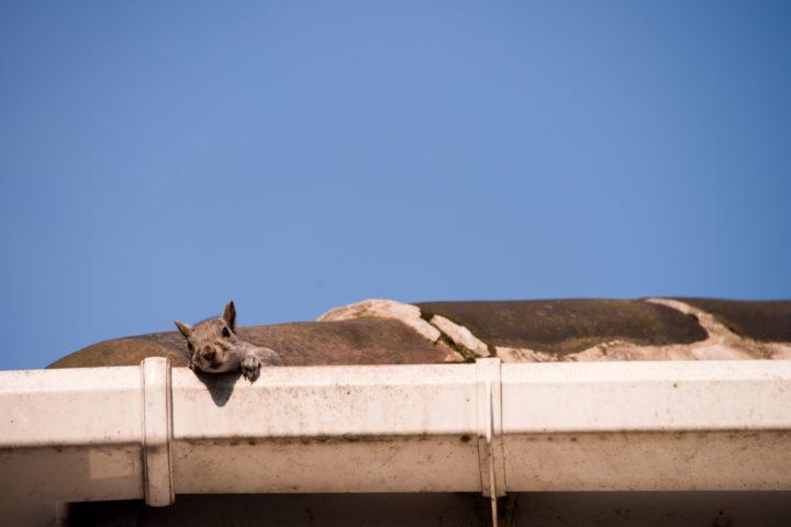 kratzgeraeusche-auf-dem-dachboden